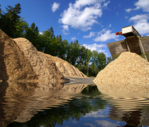 Wood chips for processing
